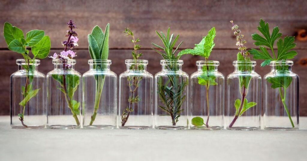 ekstrakty roślinne